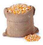 58145787-corn-grains-in-bag-isolated-on-white-background-corn-seeds-in-sack-dry-uncooked-corn-grains-for-popc